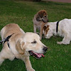Bruce, Sasha, elian puppy_001