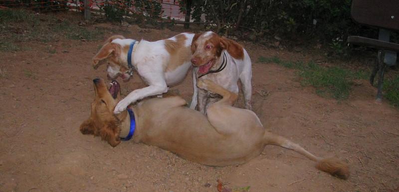 Chupi, Kira, Lola_001