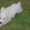 Elian puppy_001
