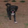 Coco (puppy boy)_001