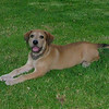 Sasha (girl 2m puppy)_003