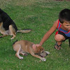 Sasha (girl 2m puppy)_002