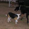 Ayora dog, Sombra_001