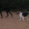 Ayora dog, Sombra_002