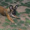 Ayora Park dog_001
