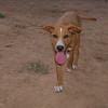Ayora Dogs pup boy_001