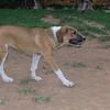 Aroma (girl puppy)_005