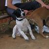 Braco (puppy boy)_001