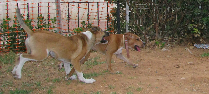 Aroma (boy puppy), Tyson_001