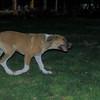 Aroma (girl puppy)_004