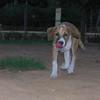 Aroma (girl puppy)_003
