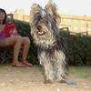 Badi (boy pup)_001
