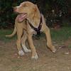 Arenita (puppy girl)_003
