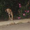 Arenita (puppy girl)_005