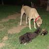 Brutus,  Coco, Mimi_001