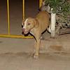 Arenita (puppy)_001