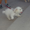 Dog (puppy girl)_003