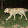 Bruce (pup boy)_003