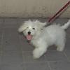Dog (puppy girl)_002