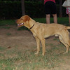 Dog boy podenco_001