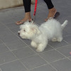 Dog (puppy girl)_001