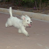 Dog (puppy girl)_004