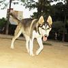 Lobo (new pup boy)