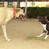 Sade (the pup) , Mimi (the queen)