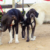 Coco, Maia, Sade_001