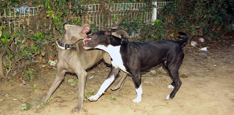 Sira: new girl pup - 1st day, Sade *************