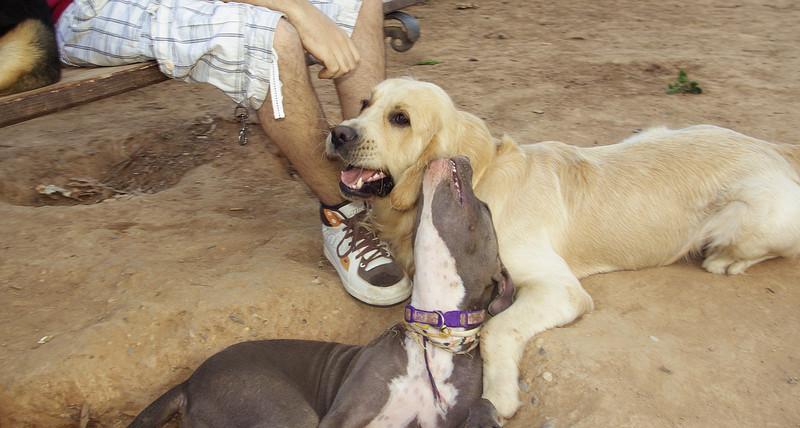 Bruce, Naia, 001, august11, friend, pitbull, ayora, hug