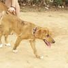 Carnella (puppy of Byron & other)_001