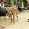 Carnella (puppy of Byron & other)_002