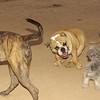Dante, Tiger, Maia_001