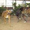 Axel, Turco, Naia_001