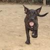 Cordito (puppy boy)_001
