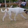 Ayora dog_001