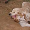 Chupi, ayora dog_003
