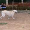 Ayora dog_011