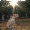 Ayora dog_006