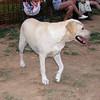 Ayora dog_012