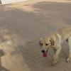 Ayora dog_002