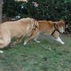 Ayora dog, Maya_005