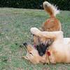 Ayora dog, Maya_004