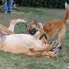 Ayora dog, Maya_001