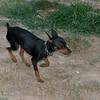 Brutus (puppy boy)_007
