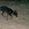 Brutus (puppy boy)_015