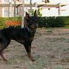 Brutus (puppy boy)_006