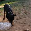 Brutus (puppy boy)_001