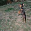 Brutus (puppy boy)_018